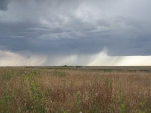 Rain on the Plain