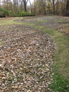 Mowed leaf path